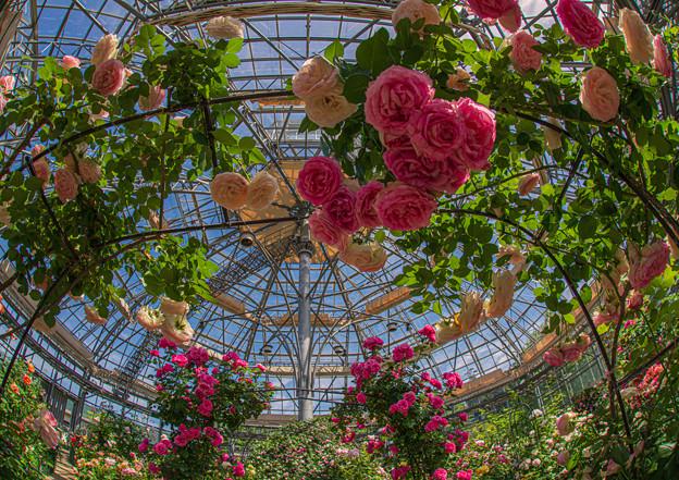 Photos: rose dome