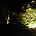 Photos: ライトアップ紅葉  1