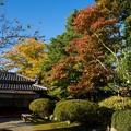 写真: 立派なお庭の紅葉