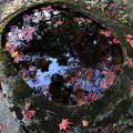写真: 水の中に紅葉
