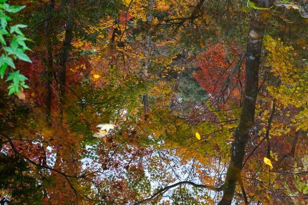 鏡にうつる秋