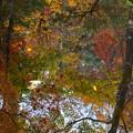 写真: 鏡にうつる秋
