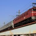 Photos: 配9847レ EF81 134+E217系横クラY50編成 7両