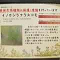 写真: 「イノカシラフラスコモ」の復活