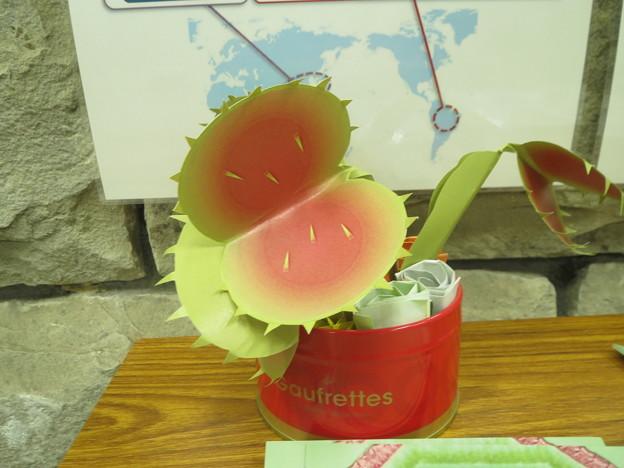 折り紙で作ったスイレンの花