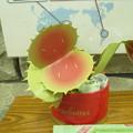 写真: 折り紙で作ったスイレンの花