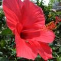 Photos: 赤き花粉