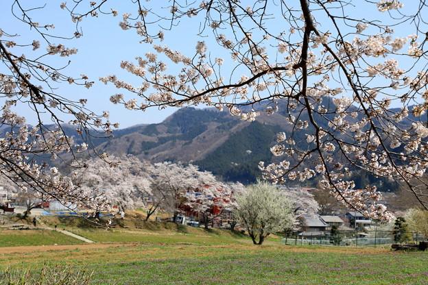 野土山の春