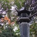 写真: 岡本静嘉堂緑地 (世田谷区岡本)