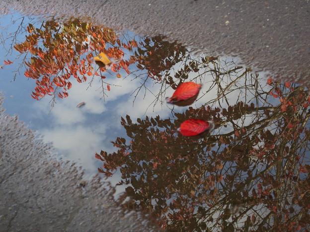 Photos: 秋、見つけた