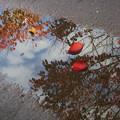 写真: 秋、見つけた