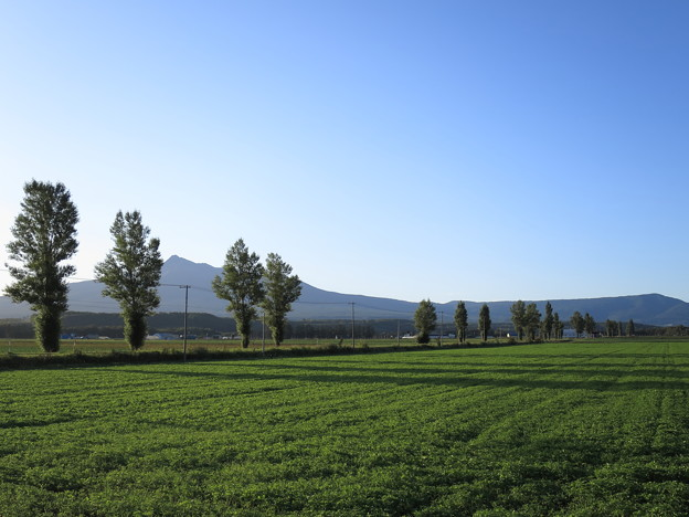 朝の光とポプラ並木