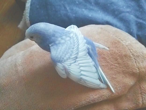 伸びをするメメちゃん。羽は白い