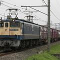 Photos: _MG_0476 EF65-1121 蘇我貨物