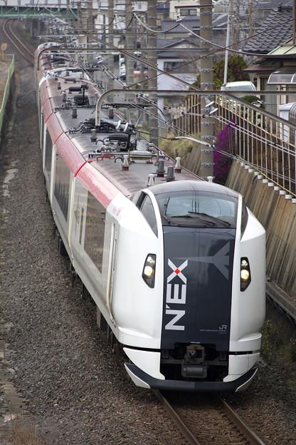 _R8A0466_SILKY E259系 成田エクスプレス19号