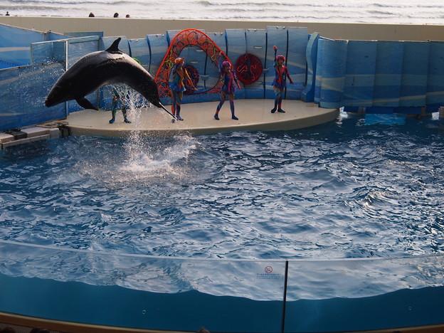 新江の島水族館 イルカ・ショウ1