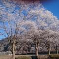 Photos: 霧氷4