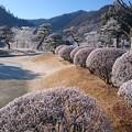 Photos: 霧氷7