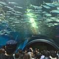 Photos: 10月_エプソンアクアパーク品川 4