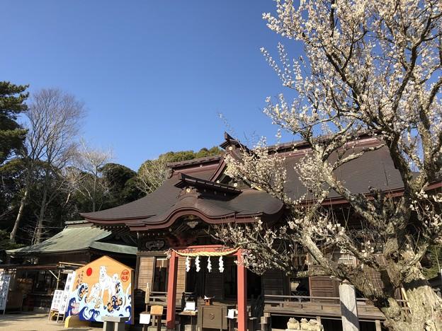 3月_大洗磯前神社 6