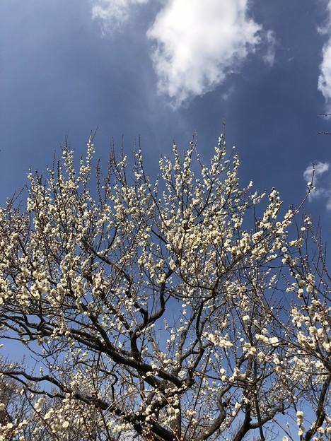 3月_偕楽園 8