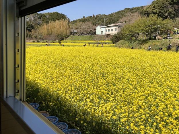 3月_小湊鐵道 4
