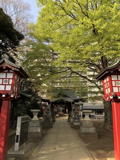 3月_江古田氷川神社 2