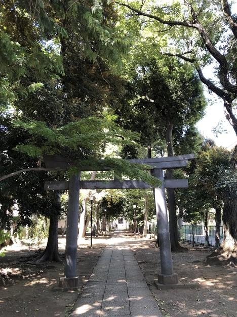 8月_氷川神社 1