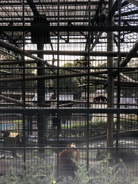 9月_野毛山動物園 1