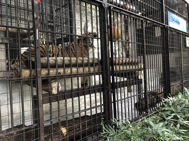 9月_野毛山動物園 2