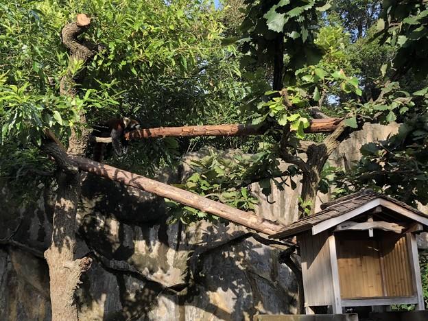 9月_野毛山動物園 4