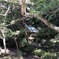 11月_鹿島神宮 c
