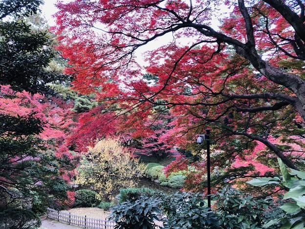 12月_東京都庭園美術館 2