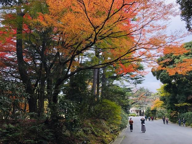 12月_東京都庭園美術館 3
