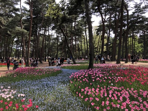 4月_国営ひたち海浜公園 p