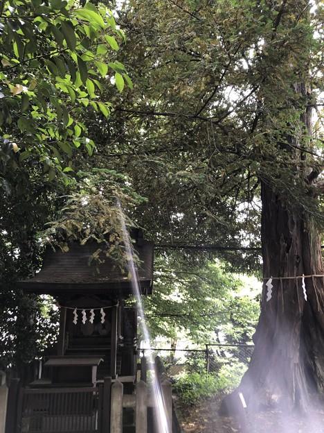 5月_諏訪神社 4
