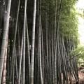 Photos: 9月_殿ヶ谷戸庭園 1