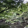 Photos: 9月_殿ヶ谷戸庭園 3