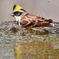 写真: 水も滴るいい男。