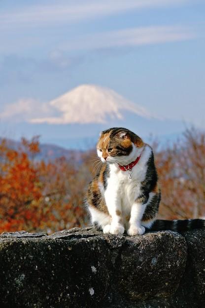 一富士二猫