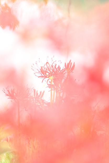写真: Far Away