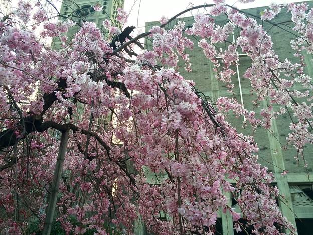 Photos: 世界平和記念聖堂 Memorial Cathedral for World Peace 広島市中区幟町 2016年3月31日