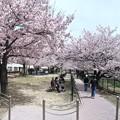 二河川公園 さくら 呉市三条4丁目 2016年4月5日