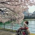 お散歩まりちゃん walk in wheelchair 広島市南区猿猴橋町 猿猴川左岸遊歩道 2018年4月1日