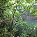 アカショウビン 飛来する沼(3)