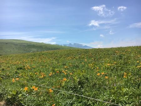 花(60)-高原の夏花、今が盛り