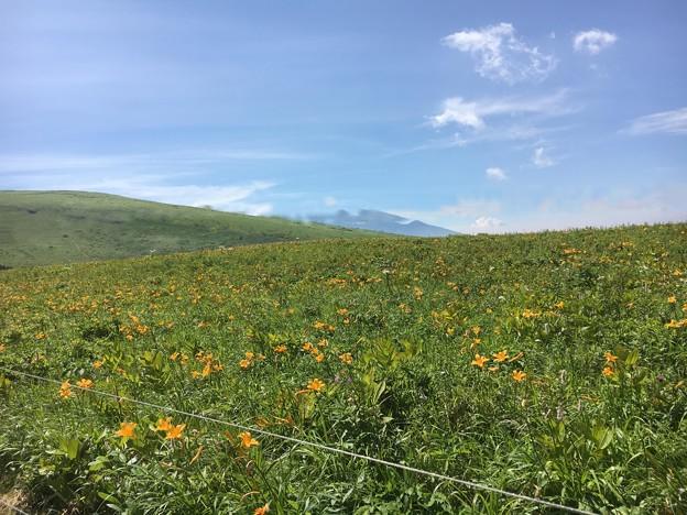 車山高原の花畑