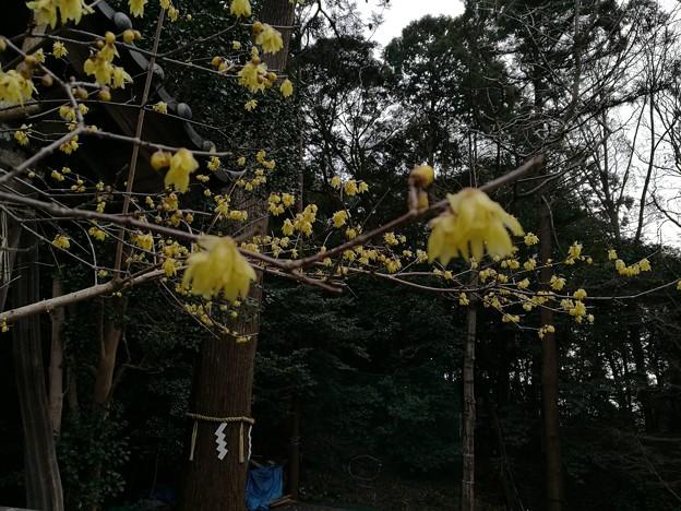 Photos: IMG_20180224_154442