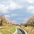 一目千本桜3