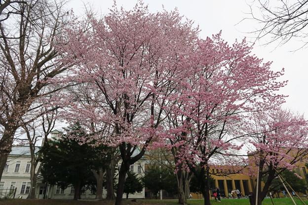 北海道大学その2